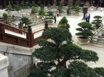 Grounds at Chi Lin Nunnery in Hong Kong
