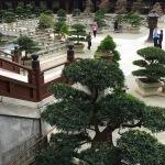Grounds at Chi Lin Nunnery in Hong Kong